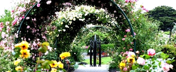 Ilustrasi kebun mawar. Photo credit: Auckland Botanical Gardens